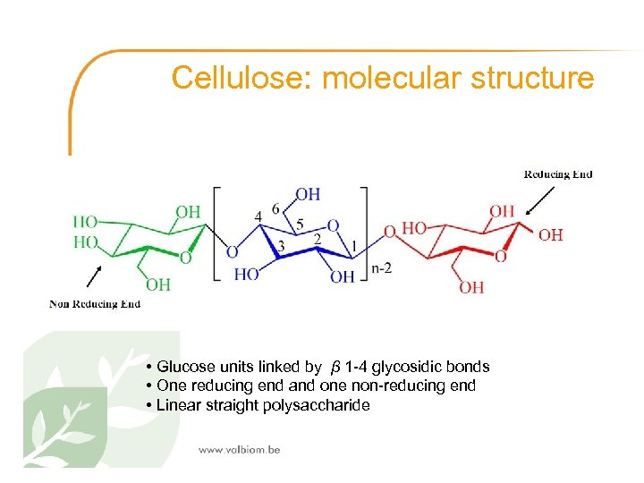 Cellulose: molecular structure • Glucose units linked by β 1 -4 glycosidic bonds •