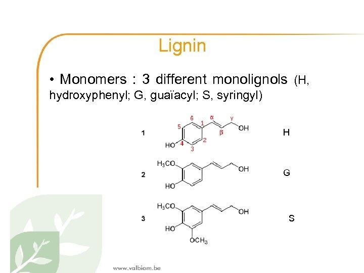 Lignin • Monomers : 3 different monolignols (H, hydroxyphenyl; G, guaïacyl; S, syringyl) H