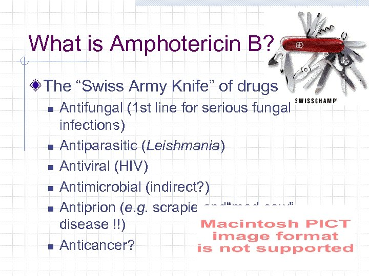 "What is Amphotericin B? The ""Swiss Army Knife"" of drugs n n n Antifungal"