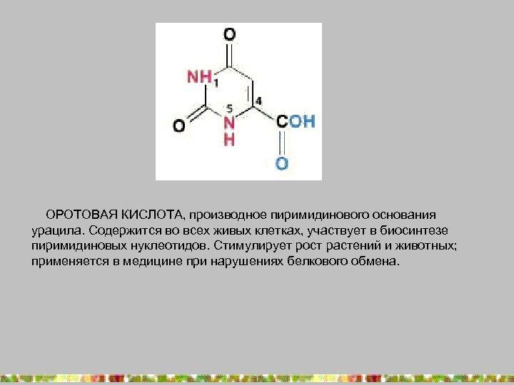 ОРОТОВАЯ КИСЛОТА, производное пиримидинового основания урацила. Содержится во всех живых клетках, участвует в биосинтезе