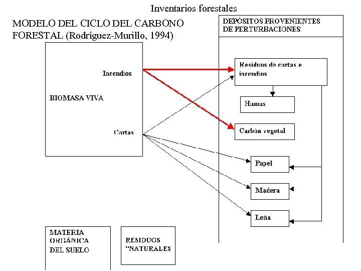 Inventarios forestales MODELO DEL CICLO DEL CARBONO FORESTAL (Rodríguez-Murillo, 1994)