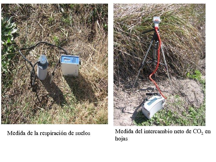 Medida de la respiración de suelos Medida del intercambio neto de CO 2 en