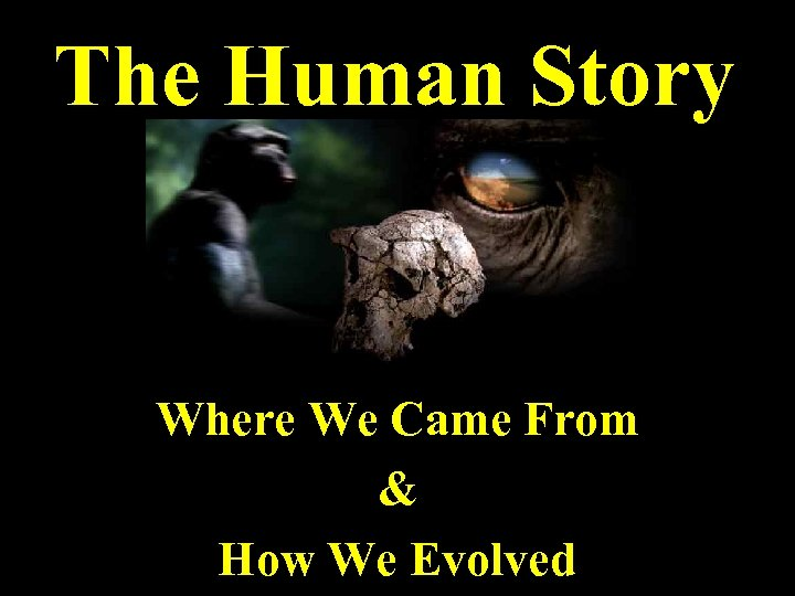 The Human Story Where We Came From & How We Evolved