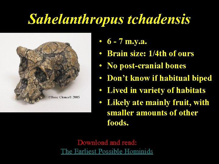 Sahelanthropus tchadensis • • • 6 - 7 m. y. a. Brain size: 1/4