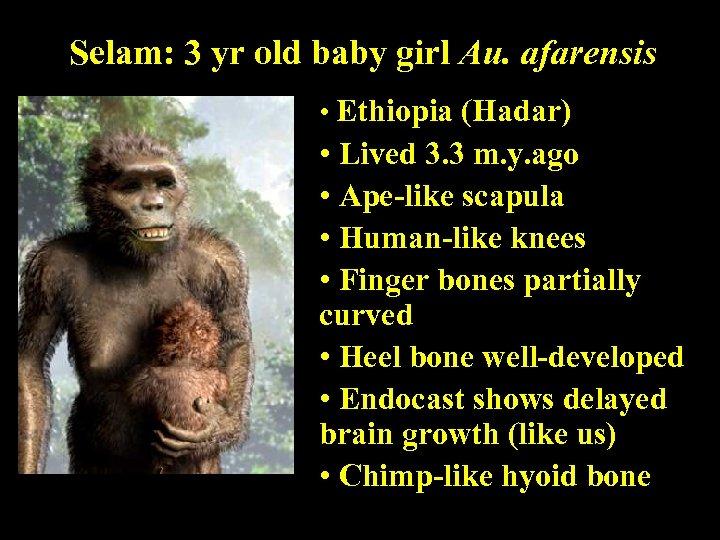 Selam: 3 yr old baby girl Au. afarensis • Ethiopia (Hadar) • Lived 3.