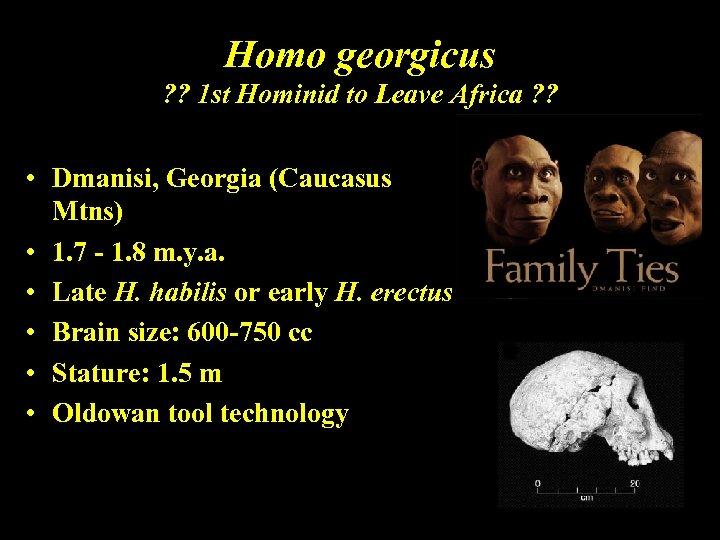 Homo georgicus ? ? 1 st Hominid to Leave Africa ? ? • Dmanisi,