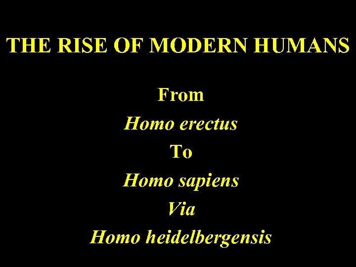 THE RISE OF MODERN HUMANS From Homo erectus To Homo sapiens Via Homo heidelbergensis