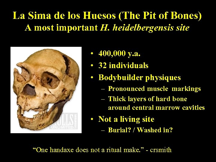 La Sima de los Huesos (The Pit of Bones) A most important H. heidelbergensis
