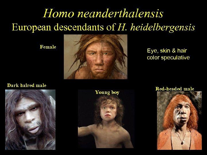Homo neanderthalensis European descendants of H. heidelbergensis Female Eye, skin & hair color speculative