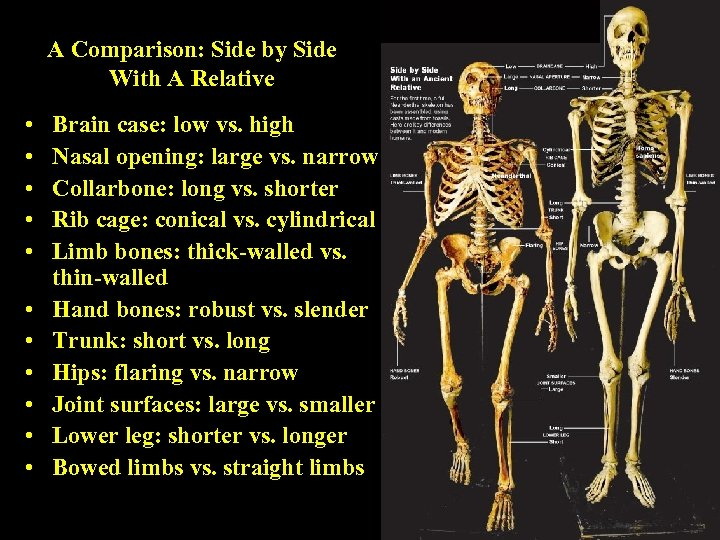 A Comparison: Side by Side With A Relative • • • Brain case: low