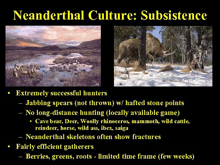 Neanderthal Culture: Subsistence • Extremely successful hunters – Jabbing spears (not thrown) w/ hafted