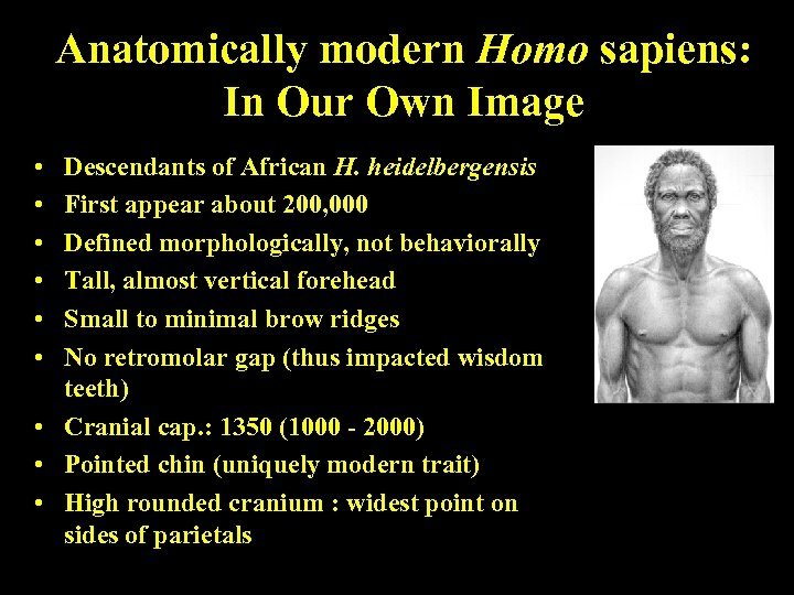 Anatomically modern Homo sapiens: In Our Own Image • • • Descendants of African