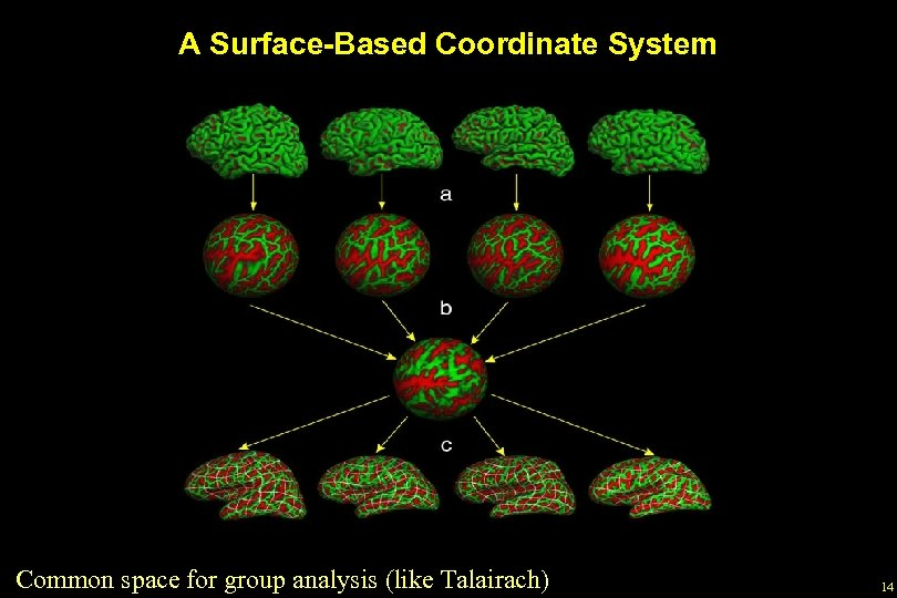 A Surface-Based Coordinate System Common space for group analysis (like Talairach) 14