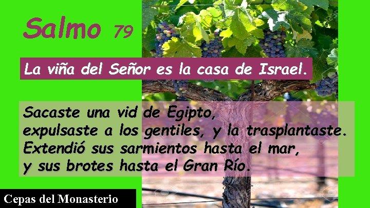 Salmo 79 La viña del Señor es la casa de Israel. Sacaste una vid