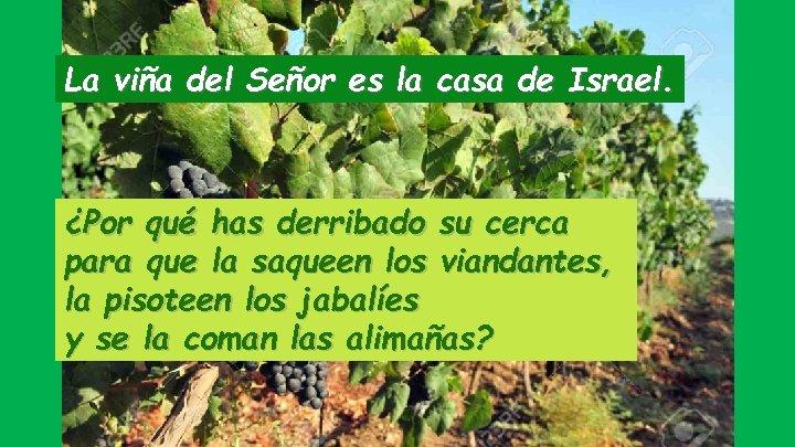 La viña del Señor es la casa de Israel. ¿Por qué has derribado su
