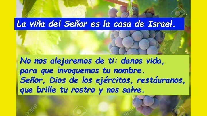 La viña del Señor es la casa de Israel. No nos alejaremos de ti: