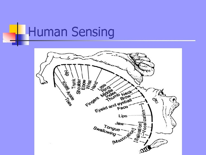 Human Sensing