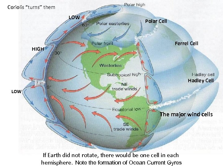 "Coriolis ""turns"" them LOW HIGH Polar Cell Ferrel Cell Hadley Cell LOW The major"