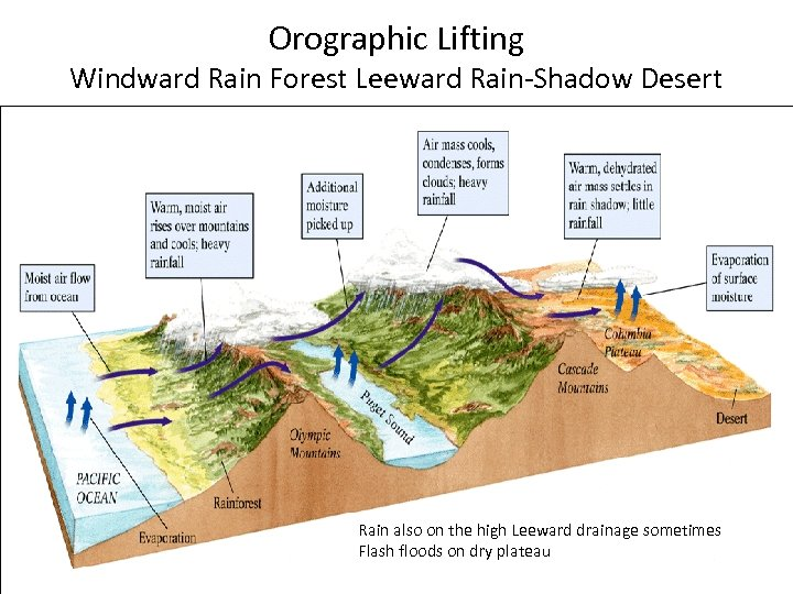 Orographic Lifting Windward Rain Forest Leeward Rain-Shadow Desert Rain also on the high Leeward