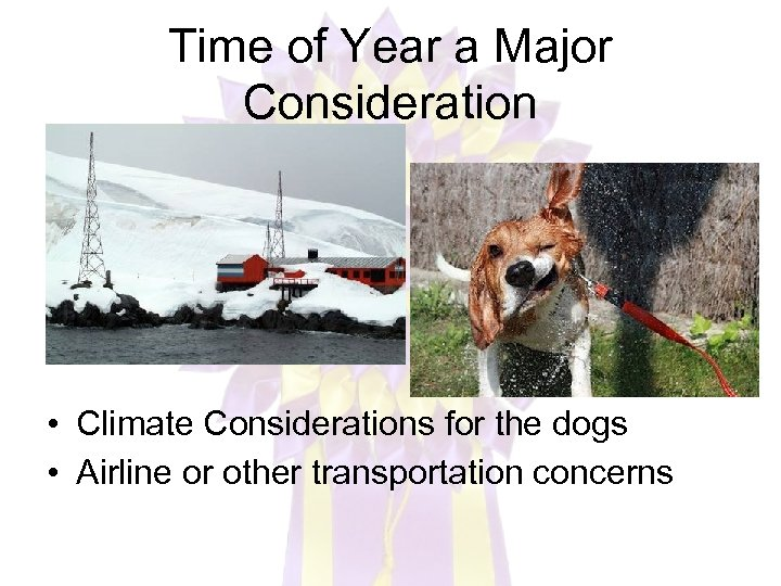 Time of Year a Major Consideration • Climate Considerations for the dogs • Airline
