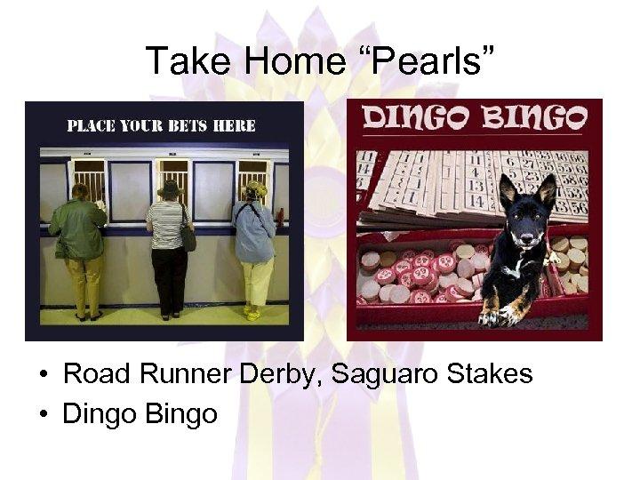 "Take Home ""Pearls"" • Road Runner Derby, Saguaro Stakes • Dingo Bingo"