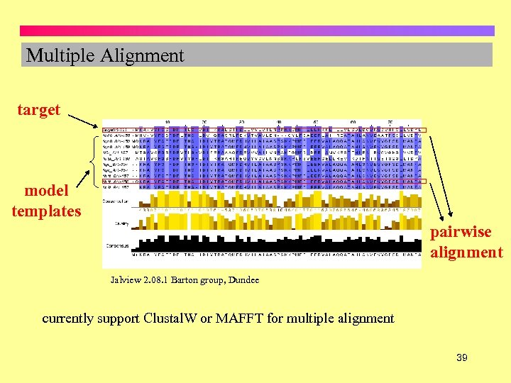 Multiple Alignment target model templates pairwise alignment Jalview 2. 08. 1 Barton group, Dundee