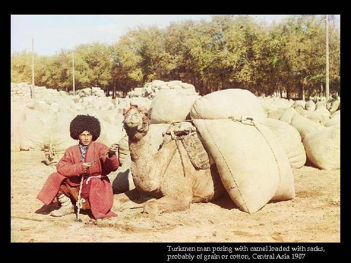 Turkmen man posing with camel loaded with sacks, probably of grain or cotton, Central