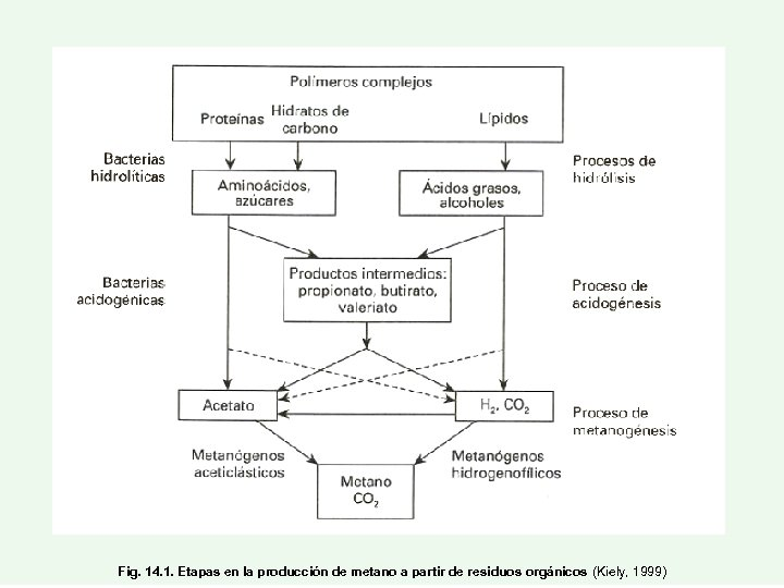Fig. 14. 1. Etapas en la producción de metano a partir de residuos orgánicos