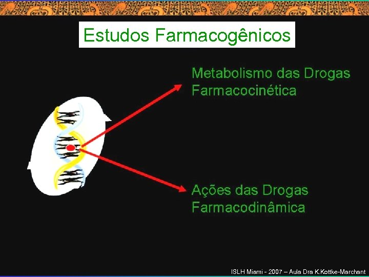 Estudos Farmacogênicos ISLH Miami - 2007 – Aula Dra K. Kottke-Marchant