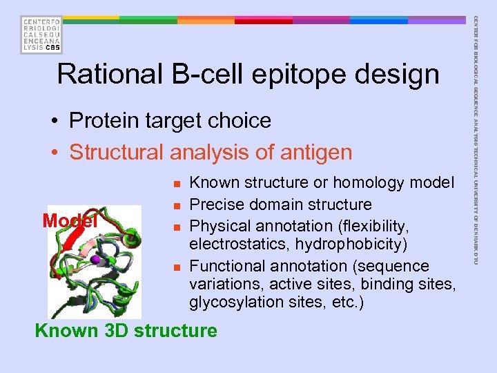 • Protein target choice • Structural analysis of antigen n Model n n