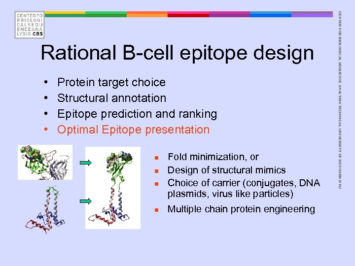 • • Protein target choice Structural annotation Epitope prediction and ranking Optimal Epitope