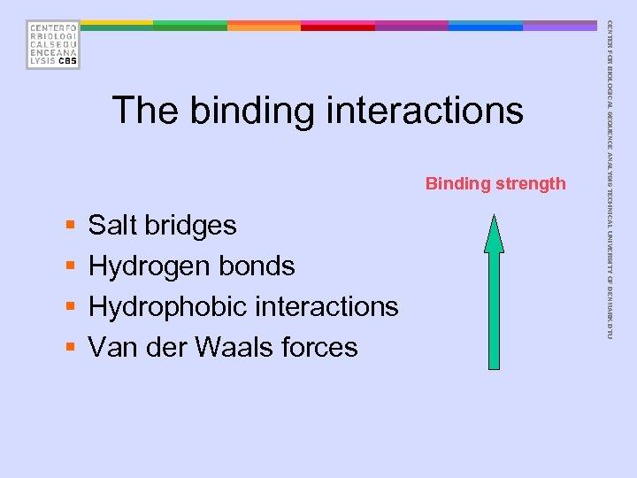 Binding strength § § Salt bridges Hydrogen bonds Hydrophobic interactions Van der Waals forces