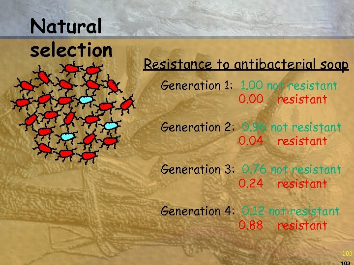 Natural selection Resistance to antibacterial soap Generation 1: 1. 00 not resistant 0. 00