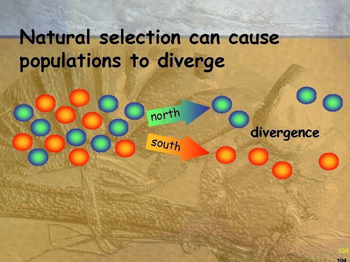 Natural selection cause populations to diverge north south divergence 104