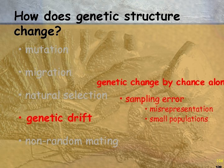 How does genetic structure change? • mutation • migration genetic change by chance alon