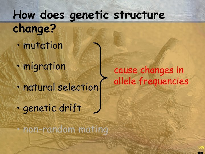 How does genetic structure change? • mutation • migration • natural selection cause changes