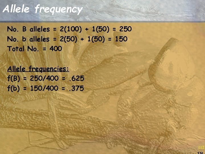Allele frequency No. B alleles = 2(100) + 1(50) = 250 No. b alleles