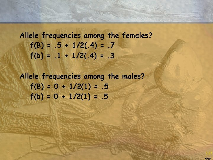 Allele frequencies among the females? f(B) =. 5 + 1/2(. 4) =. 7 f(b)