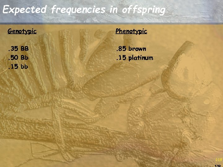 Expected frequencies in offspring Genotypic Phenotypic . 35 BB. 50 Bb. 15 bb .