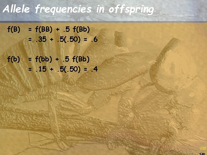 Allele frequencies in offspring f(B) = f(BB) +. 5 f(Bb) =. 35 +. 5(.
