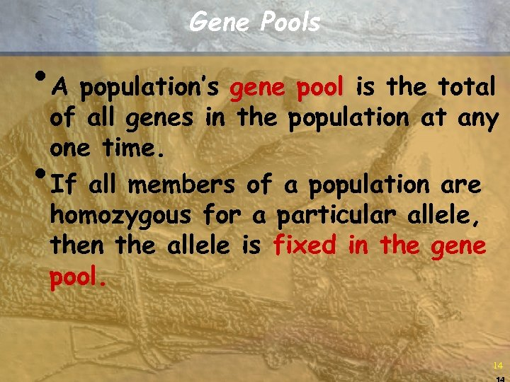 Gene Pools • A population's gene pool is the total of all genes in