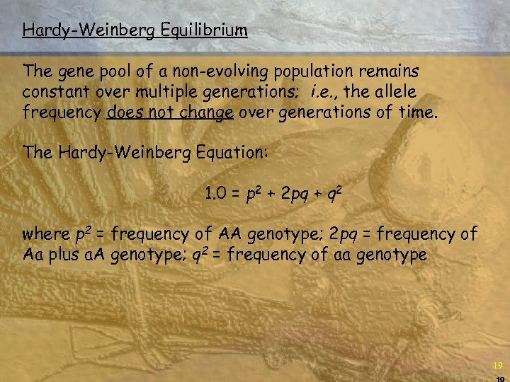 Hardy-Weinberg Equilibrium The gene pool of a non-evolving population remains constant over multiple generations;