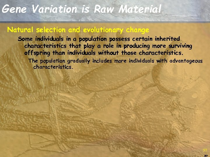 Gene Variation is Raw Material Natural selection and evolutionary change Some individuals in a