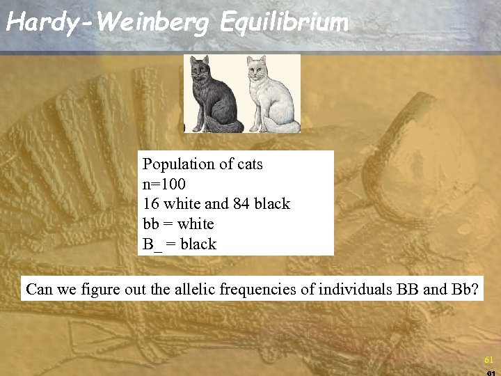 Hardy-Weinberg Equilibrium Population of cats n=100 16 white and 84 black bb = white