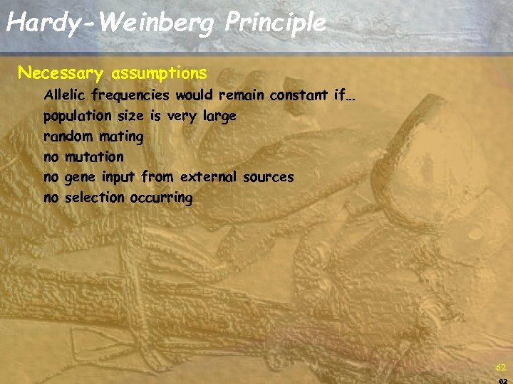 Hardy-Weinberg Principle Necessary assumptions Allelic frequencies would remain constant if… population size is very