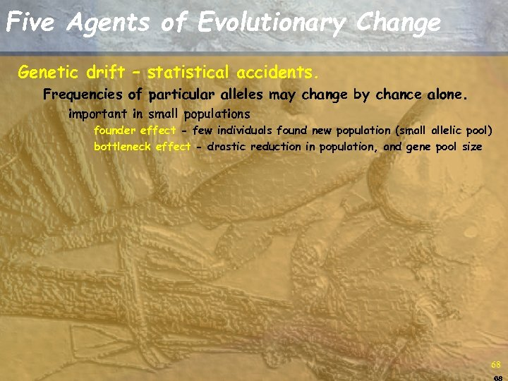 Five Agents of Evolutionary Change Genetic drift – statistical accidents. Frequencies of particular alleles