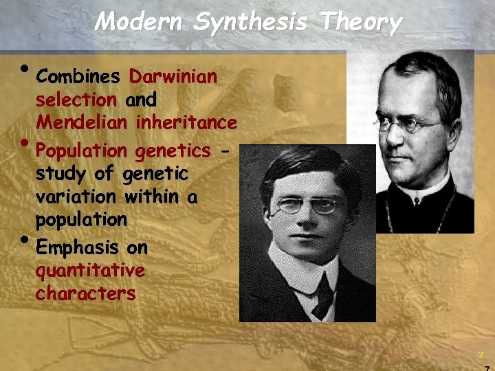 Modern Synthesis Theory • Combines Darwinian • • selection and Mendelian inheritance Population genetics