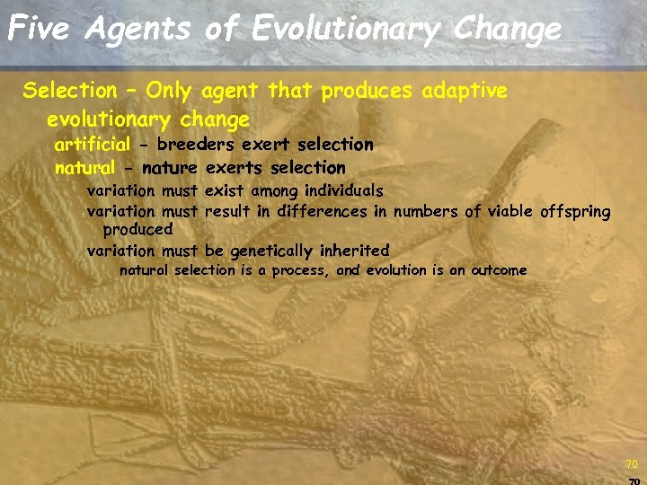 Five Agents of Evolutionary Change Selection – Only agent that produces adaptive evolutionary change