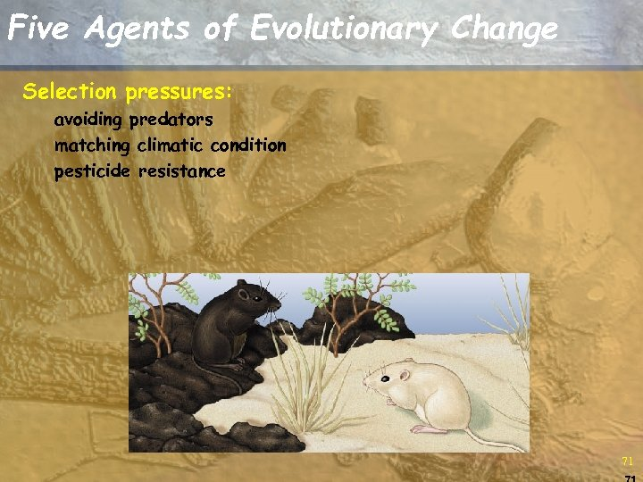 Five Agents of Evolutionary Change Selection pressures: avoiding predators matching climatic condition pesticide resistance