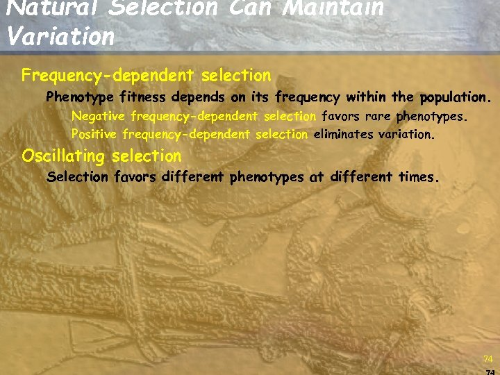 Natural Selection Can Maintain Variation Frequency-dependent selection Phenotype fitness depends on its frequency within